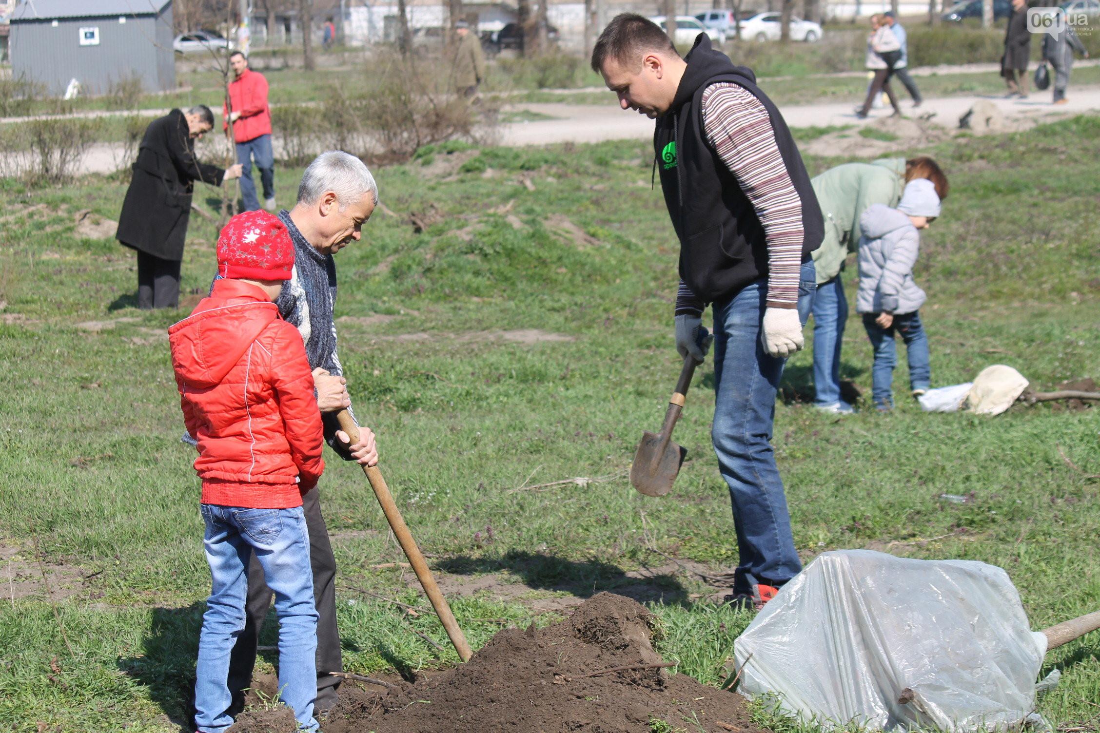 В Запорожье планируют повторно высадить деревья на месте вырубленного сквера Яланского