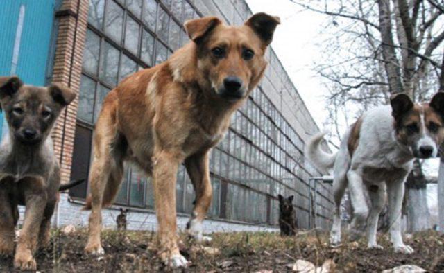 В Запорожье пенсионерка подверглась нападению бездомных собак – ФОТО