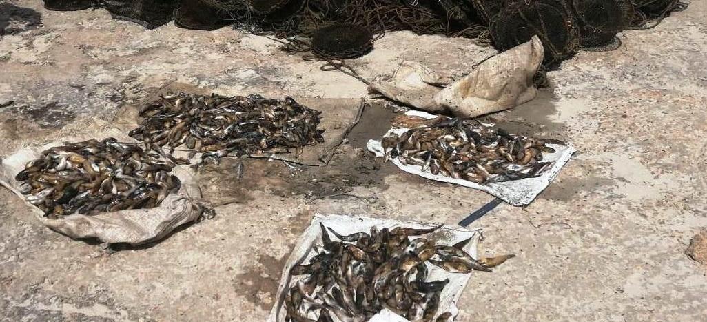 На запорожском курорте задержали браконьеров с уловом на 20 тысяч гривен - ФОТО