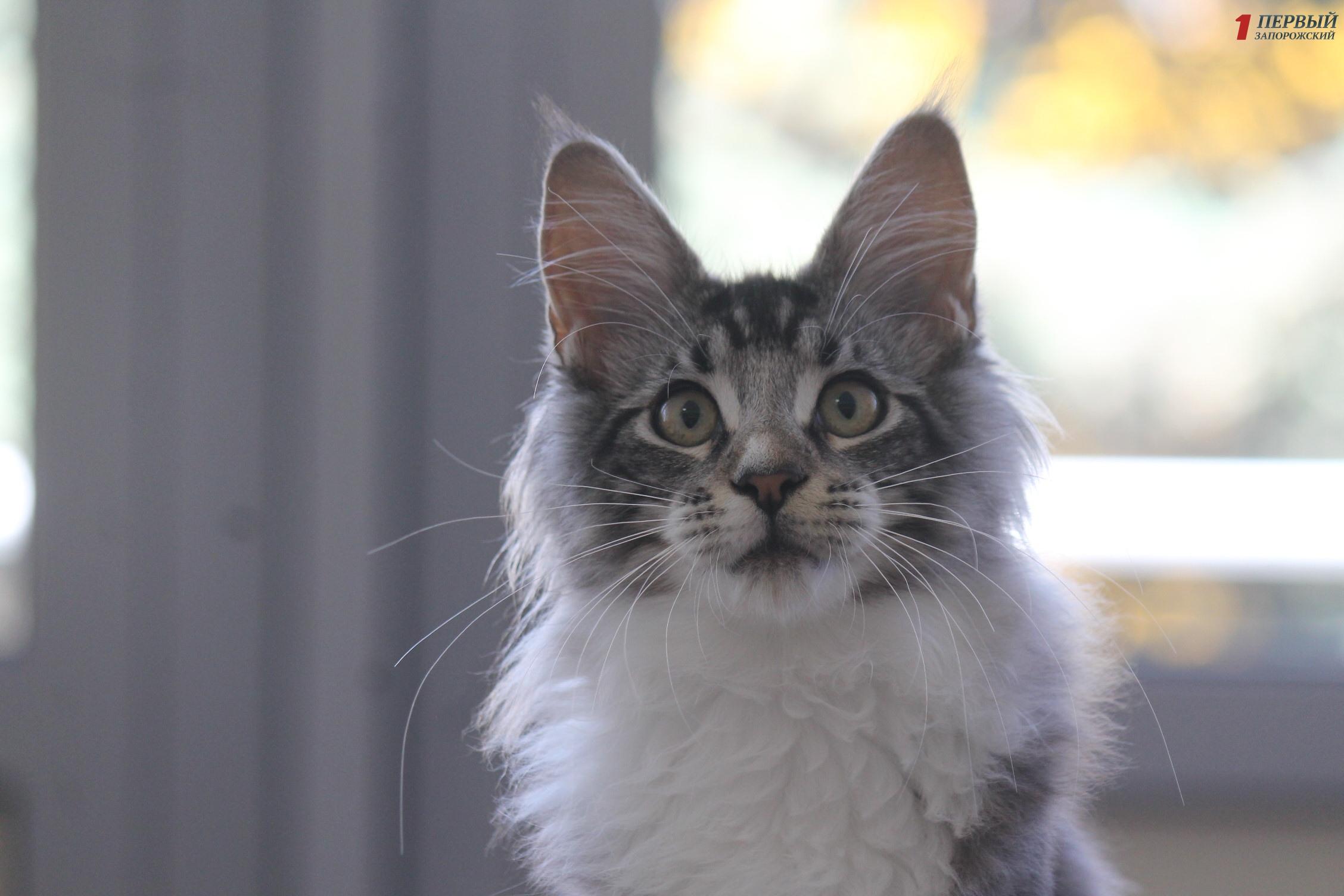 В Запорожье в ДС «Юность» прошла выставка кошек - ФОТО