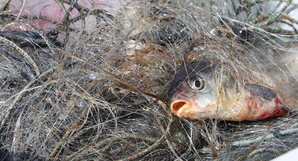 У Запорізькій області затримали рибалок-браконьєрів - ФОТО