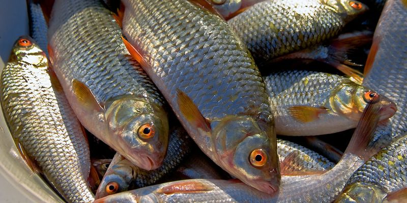 Под Запорожьем на Каховском водохранилище задержали браконьера - ФОТО