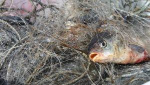 На Каховском водохранилище задержали браконьеров, выловивших 35 килограммов рыбы – ФОТО