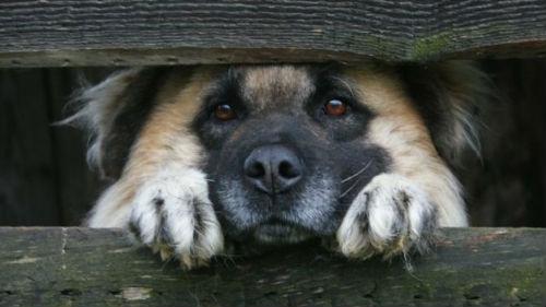 В Запорожье живодер забил насмерть собаку на территории районной больницы - ВИДЕО