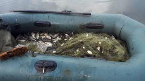 У Запорізькому районі затримали двох рибаків-порушників - ФОТО