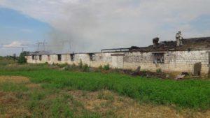 У Запорізькій області горіла ферма: пожежні врятували поголів'я свиней - ФОТО