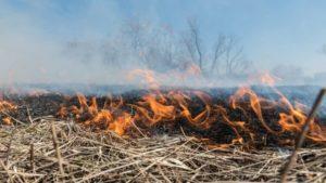 Запоріжців попереджають про надзвичайну пожежну небезпеку: повертається висока температура