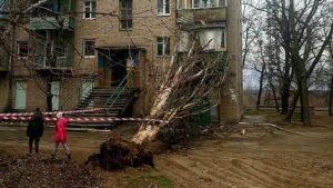 Жители Запорожья четвертый месяц пытаются добиться компенсации за рухнувшее аварийное дерево - ФОТО
