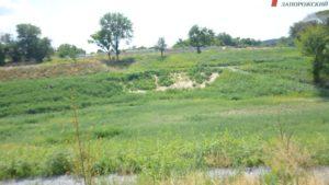 У Запоріжжі в очікуванні реконструкції ландшафтний парк на Веселці поріс травою - ФОТО