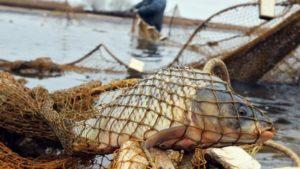 У Запорізькій області браконьєри виловили 106 кілограм риби - ФОТО