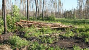 В Запорожской области вырубки лесов могут грозить самой настоящей экологической катастрофой