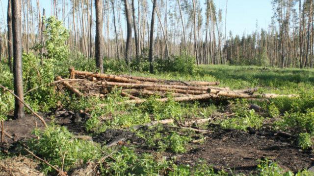 У Запорізькій області вирубки лісів можуть загрожувати справжнью екологічною катастрофою