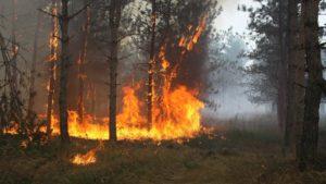 В Запорізькій області за добу рятувальники загасили 4 пожежі в екосистемах