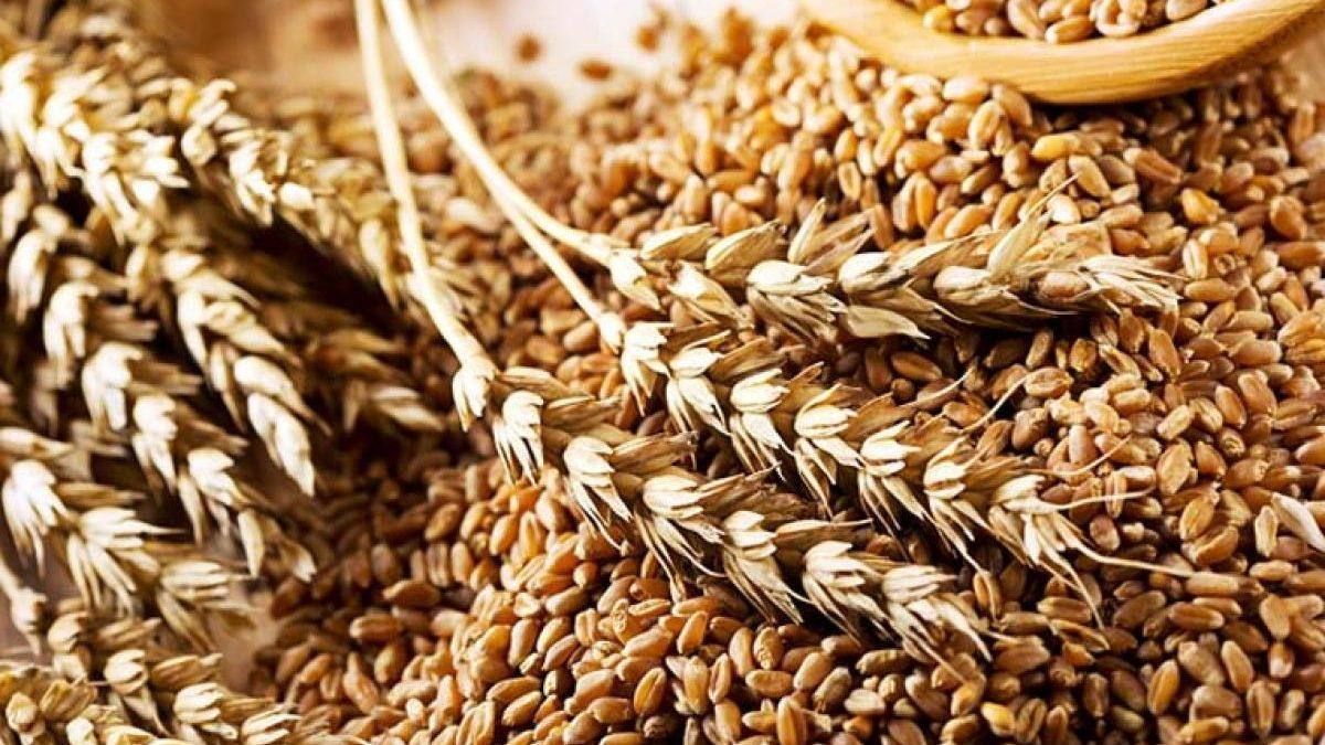 Запорізька область - у лідерах за виробництвом м'яса та зерна