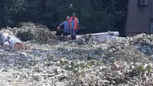 У Мелітополі орендар ділянки зобов'язалася замість спиляних дерев посадити нові