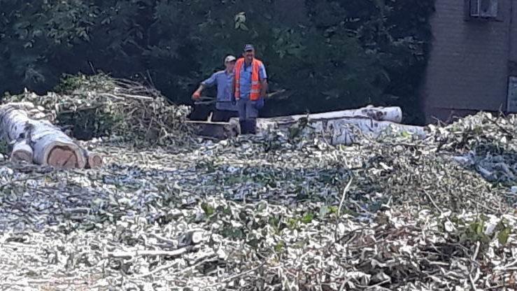 В Мелитополе арендатор участка обязалась вместо спиленных деревьев посадить новые