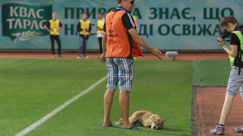В Запоріжжі перед важливим футбольним матчем на поле вибігла собака, - ФОТО