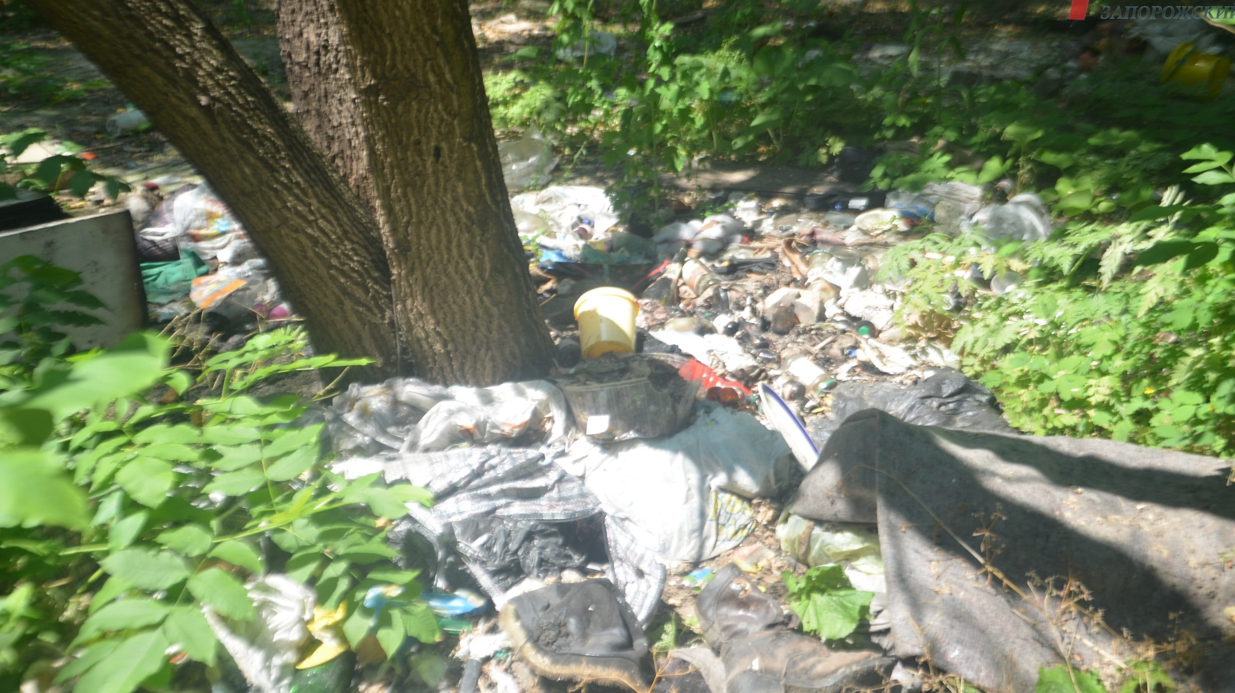 У Запоріжжі близьке оточення екс-«смотрящего» Анісімова отримає 600 тисяч гривень за розчищення балки