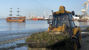 У Запорізькій області за перший тиждень серпня з пляжів вивезли більше 100 тонн водоростей