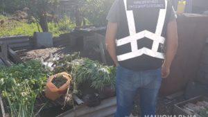 У мешканця Запорізької області знайшли наркоплантацію на 120 тисяч гривень - ФОТО