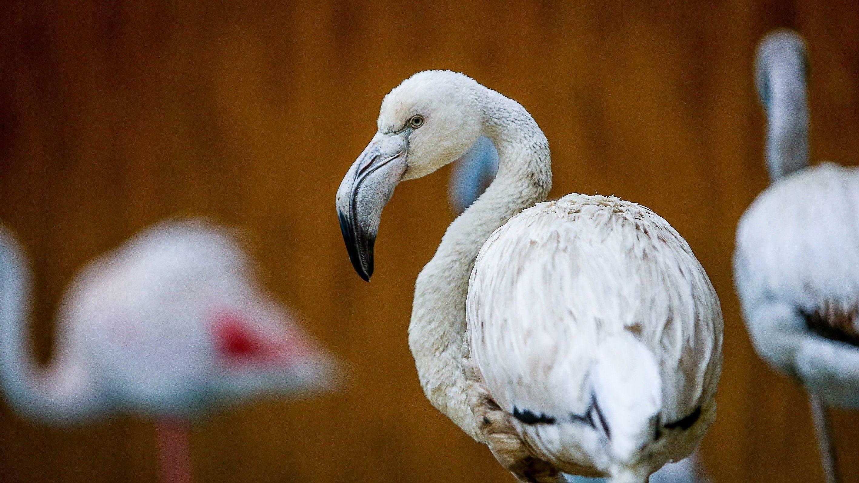У бердянському зоопарку фламінго дивуються поведінці відвідувачів - ВІДЕО