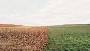 В Запорожской области прокуратура отобрала у предпринимателя 70 гектар земли