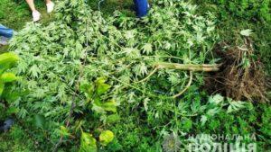 У жителя Запорожской области нашли наркоплантацию рядом с домом - ФОТО