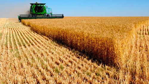 Запорізька область вибилася в лідери по урожаю зернових і бобових