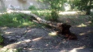 В Запорожье спасатели в непогоду вытащили 27 застрявших авто, спилили 40 деревьев и помогали откачивать воду - ВИДЕО