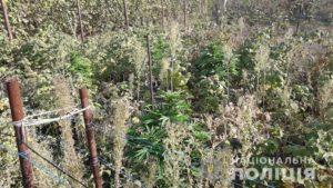 Житель Запорожья выращивал во дворе своего дома коноплю, - ФОТО