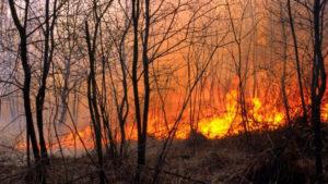 В Запорізькій області за останню добу сталося 17 пожеж в екосистемах