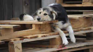 В одному з районів Запоріжжя застрелили двох собак, - ФОТО