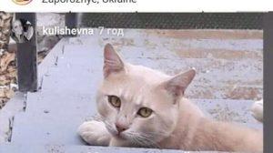 В Запорізькій області знайшовся породистий кіт, який втік від відпочивальників, - ФОТО
