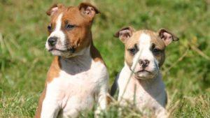 В Мелитополе наказали хозяйку собаки, укусившую ребенка