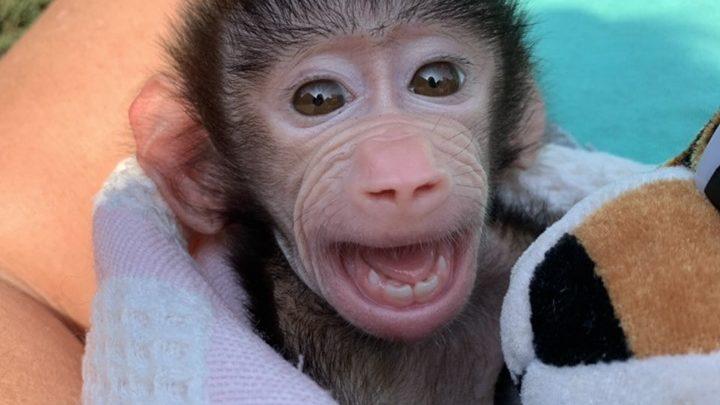 Фото маленького питомца запорожского зоопарка умилили пользователей соцсетей