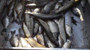 Запорожский браконьер наловил рыбы на 10 тысяч гривен, - ФОТО