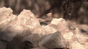 У Запоріжжі на Хортиці археологи розкопали могилу видатного скіфського воїна, — ФОТО, ВІДЕО