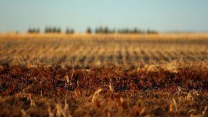 В Запорожской области у недобросовестного арендатора отобрали земельный участок
