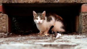 Депутаты в Запорожской области частично поддержали петицию о признании котов частью экосистемы