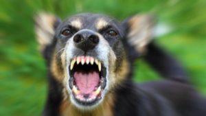 В Запорізькій області чоловік спустив на поліцейських собаку: правоохоронці у лікарні