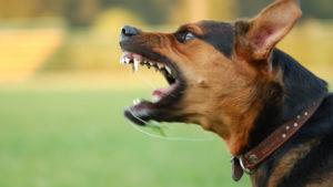 У Запорізькій області безхатні собаки загризли пенсіонерку