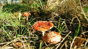 Мешканець Запорізької області отруївся домашніми грибами