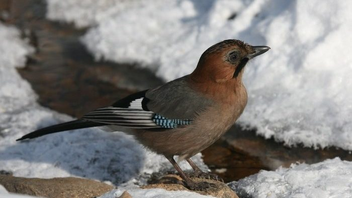 Брати наші менші: 5 порад про те, як правильно годувати птахів взимку