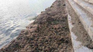 В Запорізькій області більше тижня на узбережжі гниє трава, - ФОТО