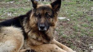 В Запоріжжі знову жорстоко отруїли собаку, — ФОТО, ВІДЕО