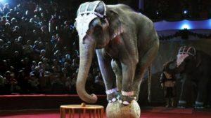 Запорізькому цирку заборонять використовувати у виставах тварин