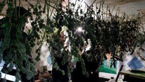 У жителя Запорожской области изъяли почти 20 килограммов наркотиков, — ФОТО