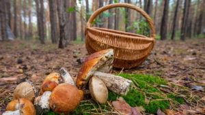 Втретє за місяць: в Запорізькій області троє людей отруїлись грибами