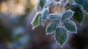 В Запоріжжі та області відзавтра почнеться мінусова температура