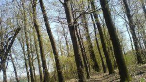 Мешканець Запорізької області побив жінку та залишив помирати у лісосмузі